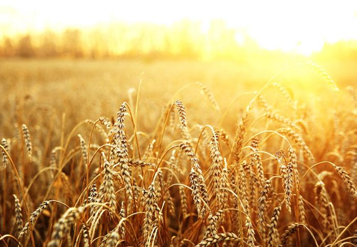 تجارت محصولات کشاورزی